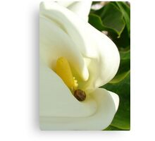 Beautiful Calla Flower On Green Natural Background  Canvas Print