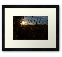 Golden Grass # 2 Framed Print
