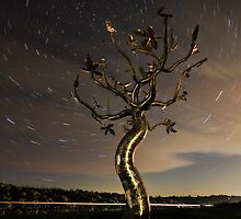 Startrail - Tree Of Life by Royston Palmer