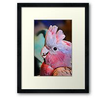 Rescue Me.... Framed Print