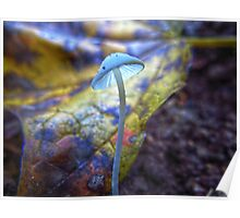 Tiny White Mushroom with Colorful Leaf Background Poster