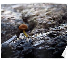 Tiny Mushroom on a decaying log Poster