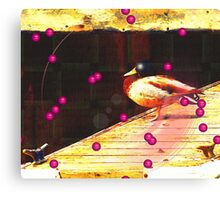Cunning Canadian Duck Canvas Print