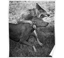 Dogs with game face on .31 Poster