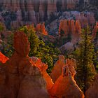 Good Morning Bryce Canyon by Shari Galiardi