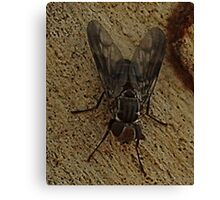 Common House Fly Canvas Print