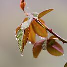 Drops on the leaves by Alex Volkoff