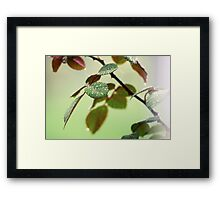 Drops on the leaves Framed Print