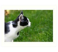 Staring Black & White Cat Art Print