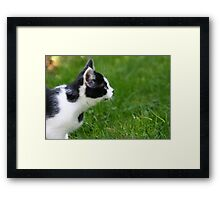 Staring Black & White Cat Framed Print