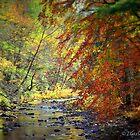 autumn stream by Tgarlick