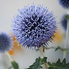 Globe Thistle Imagery by Brenda Roy