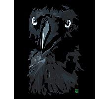 Australian Raven Photographic Print