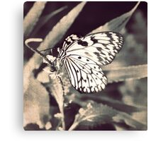 If Nothing Ever Changed, There'd Be No Butterflies Canvas Print
