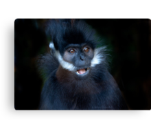 ...bad hairday...  [FEATURED] Canvas Print