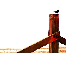Crow at the Seaside Eight Photographic Print