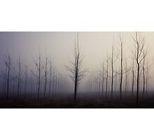 Poplars Photographic Print