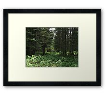 Summer Forest Framed Print