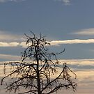 Ghostly Tree by Kathi Arnell