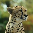 The Beautiful Cheetah  by Elaine  Manley