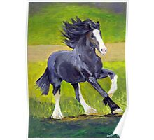 Shire Draft Horse Poster