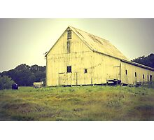 Cows and barn Photographic Print