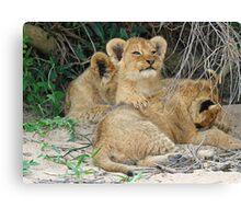 Cuddly cubs! Canvas Print