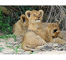 Cuddly cubs! Photographic Print