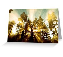 Explosion of Sunlight  Greeting Card