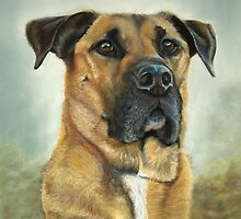 Pit Bull cross Sharpei mix Dog by Helen Chugg