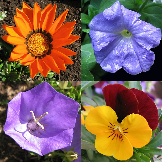 Quartet of Summer Flowers Collage by BlueMoonRose