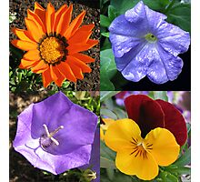 Quartet of Summer Flowers Collage Photographic Print