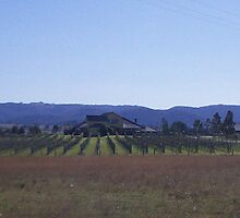 Hunter Valley Vineyard by FangFeatures