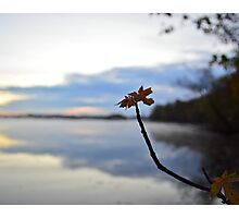 New Day Budding Photographic Print