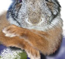 Earth Day Everyday Bunny Sticker