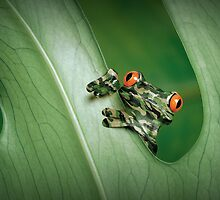 Camouflage Frog by Kitty Bitty