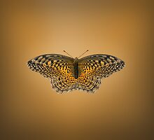Butterfly Effect  by Kitty Bitty