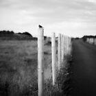 The Wexford Bird by Tiia Öhman