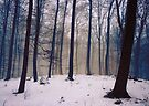 Whispers of the Forest - Forest Trees with Snow by Denis Marsili - DDTK