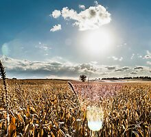 Golden Fields by ikem