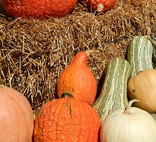 Pumpkin harvest by LManfredi