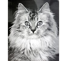 Cat 2 Photographic Print