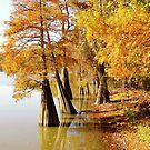 Reflections Of Autumn by WildestArt