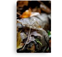 A Fallen Leaf Canvas Print