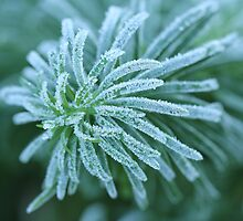 Frosty  by Lynn Gedeon