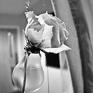 rose light by NordicBlackbird