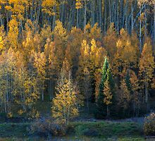 Aspen Intimate by Paul Gana