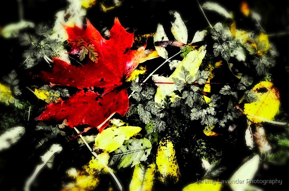 The Red Leaf by Jeremy Lavender Photography