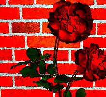 Pop Art Roses by Frances Kilbane