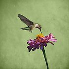 Hummingbird and Zinnia by Sandy Keeton